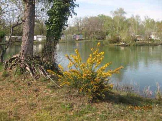 Camping les Etangs Mina : Au bord de l'étang.