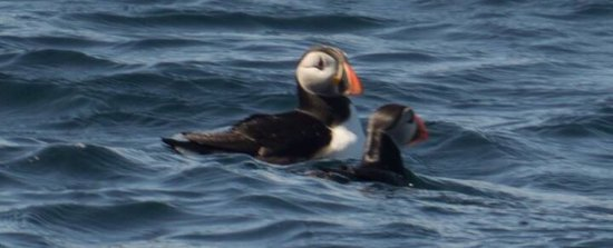 Uig, UK: You need a pretty good zoom lens, so you can catch the puffins