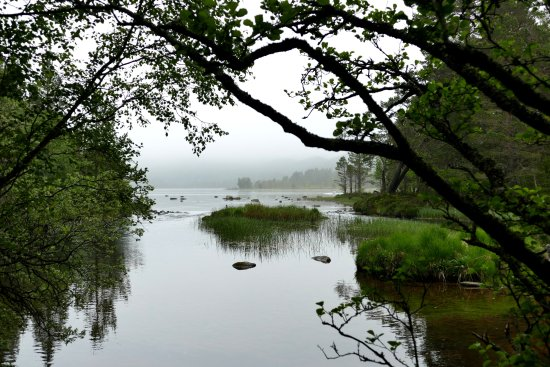 Aviemore and the Cairngorms, UK: misty Scottish day