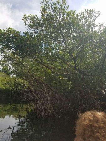 Everglades Excursions