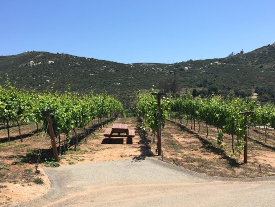 Ramona, Kalifornien: A view from the tasting patio; Sangiovese vines