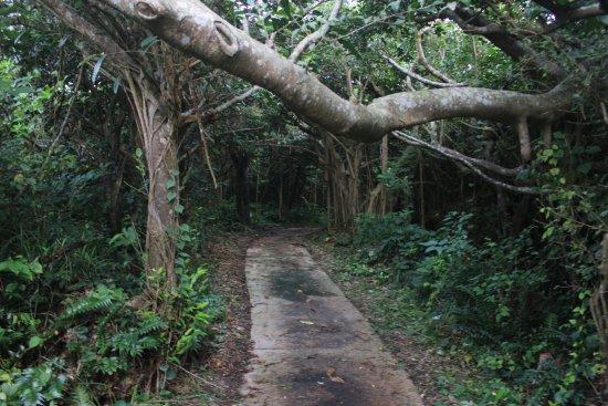 Araki-Nakasato Stroll Road