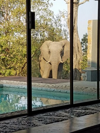 Leopard Hills Private Game Reserve: Elephant at room 5