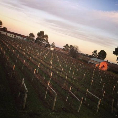 Coonawarra, Australia: View from the Room with the View, Highbank