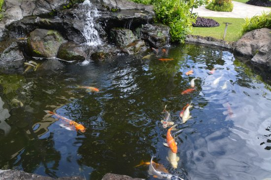 Kauai Beach Resort: Just one of the Koi ponds.