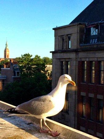 Hilton The Hague: exLounge mit engagiertem Service, nettem Abendbüffet, toller Dachterrasse und hungriger Möwe