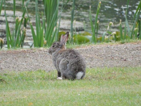 Mercure Amsterdam Airport: 庭には、ウサギもいます。