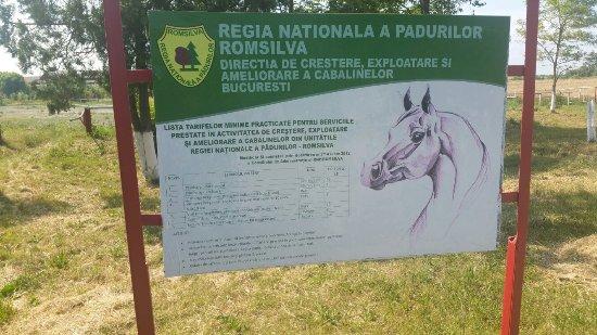 Mangalia Stud Farm