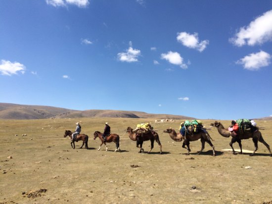 Zuunmod, Mongólia: Camels for the pack