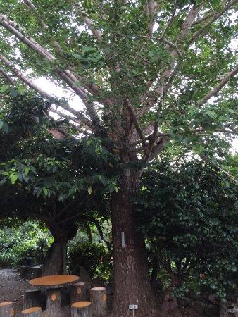 Natural Stone Garden