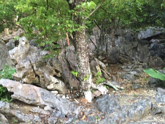 Natural Stone Garden: photo2.jpg