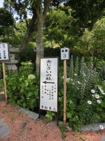 Itako, اليابان: アジサイが咲き乱れるあじさいの杜