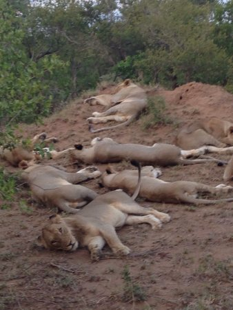 Timbavati Private Nature Reserve, Sudáfrica: Shindzela Tented Safari Camp