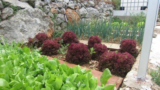 Salads In Our Bio Garden Picture Of Vidikovac Levanda Hvar Island