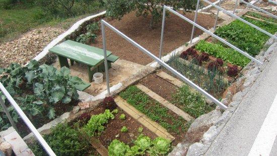 Our Bio Garden Picture Of Vidikovac Levanda Hvar Island Tripadvisor