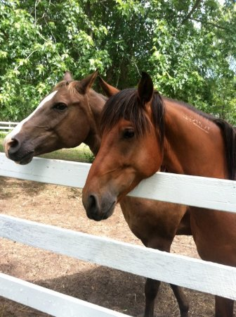 West Greenwich, RI: our horses in the overnight paddock