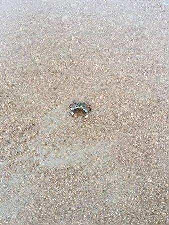 Sanderling Resort: photo0.jpg