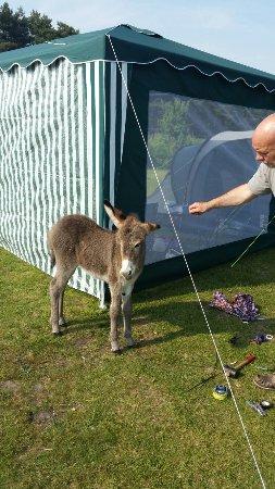 Roundhill Caravan Park & Campsite: 20160606_171319_large.jpg
