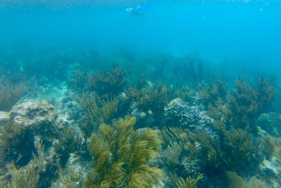 Oyster Pond, Άγιος Μαρτίνος: gorgeous reef