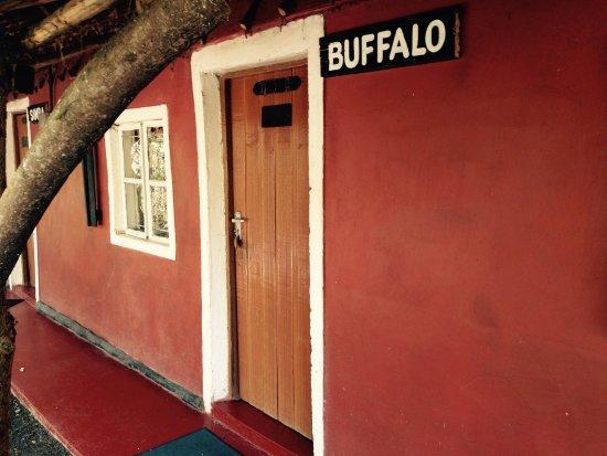 Maasai Simba Camp : Buffallo House