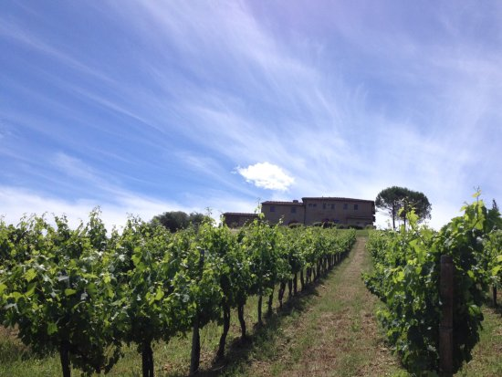 Borgo Tollena: View from the vineyard