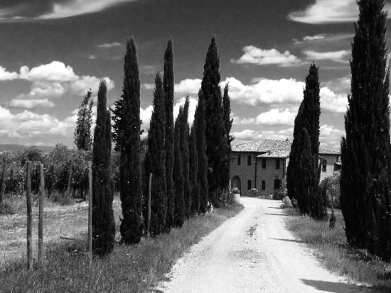 Borgo Tollena: Driveway approach Cypress trees