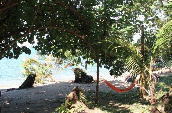 The Mangrove: Stranden