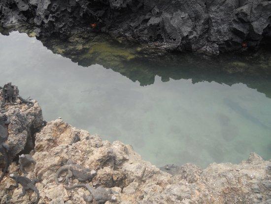 Puerto Villamil, Ecuador: iguanes, pingouins et requins