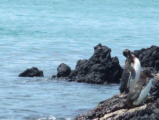 Puerto Villamil, Ekuador: iguanes, pingouins et requins