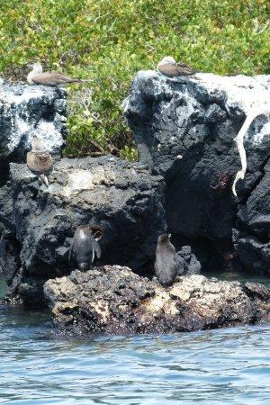 Puerto Villamil, Ekvador: iguanes, pingouins et requins
