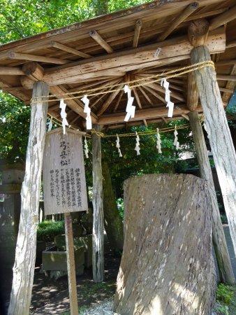 Goryo Shrine : 弓立の松