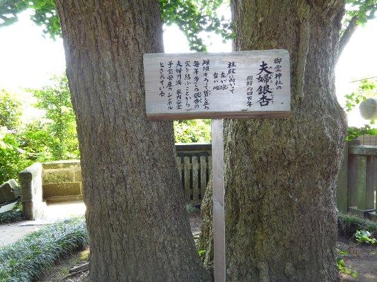 Goryo Shrine : 夫婦銀杏