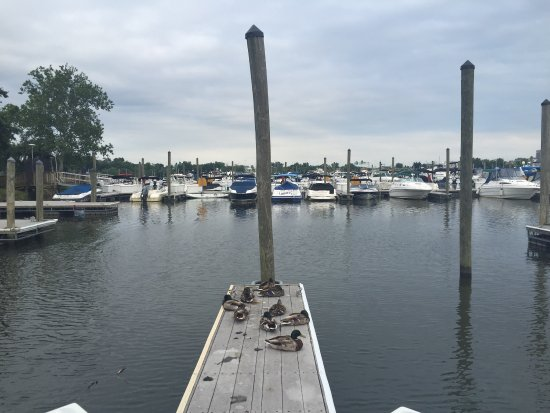 Nice spot for river breez - Review of Columbia Island Marina