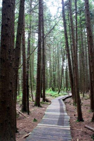 Burns Bog : Boardwalks