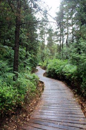 Burns Bog : More boardwalks