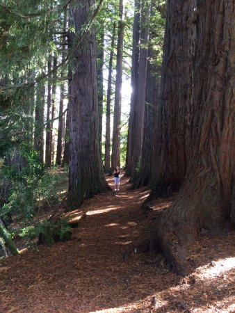 Hamurana, Nueva Zelanda: The pine forrest