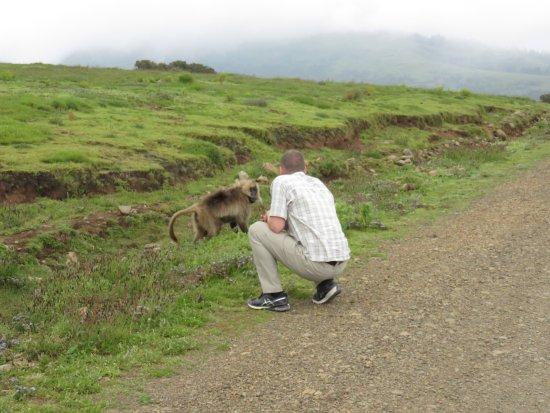 Simien Mountain Trekking and Tours: gelada monkeys
