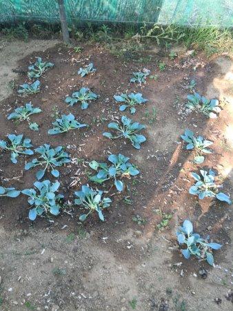 Le Jardin Botanique Frutier d'Avapessa
