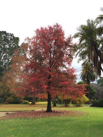 Albury Botanic Garden: photo1.jpg