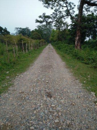 Manas National Park, India: Road next to retreat