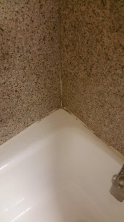 Holiday Inn Toledo/Maumee: Mold