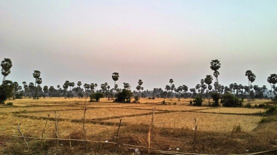 Kampong Chhnang, Campuchia: February is the dry season.. in the wet season everything is green