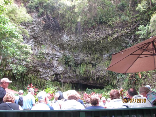 Fern Grotto Photo