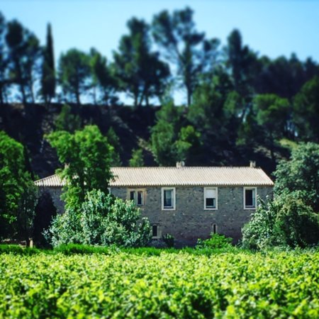 Pouzols-Minervois, France : The property