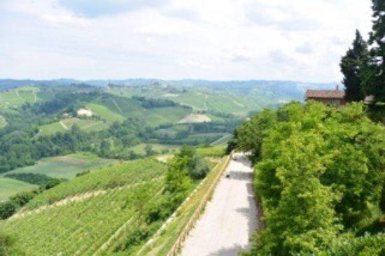 Castiglione Falletto, Italy: Cantina Vietti