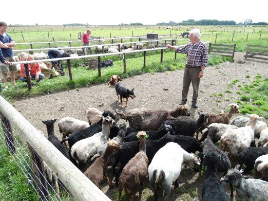 Texel met kinderen top 10 tips kinderactiviteiten for Schapenboerderij te koop
