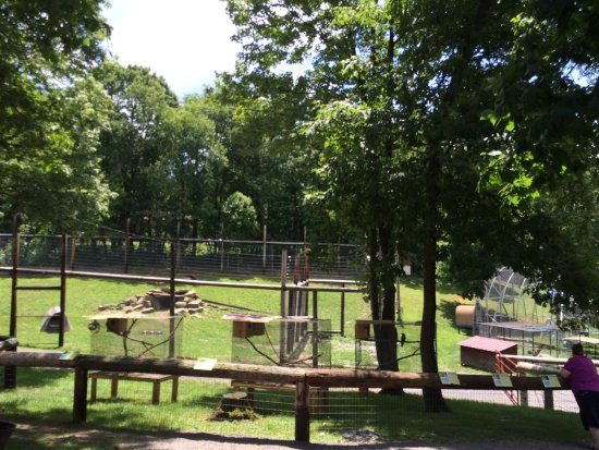 Kingwood, Virginie-Occidentale : Enclosures - lions through the trees
