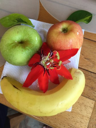 Pura Vida Hotel: Very fresh fruit made us very happy