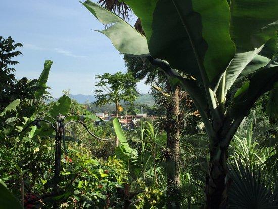 Pura Vida Hotel: View