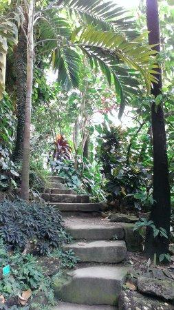 Botanical Gardens of Strasbourg University: intérieur de la serre tropicale